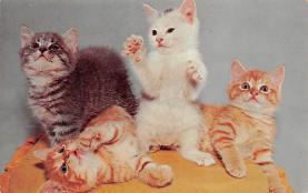 top003415 - Cat Post Card