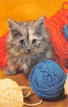 top003419 - Cat Post Card