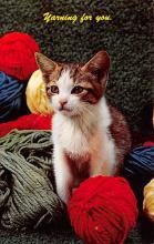 top003421 - Cat Post Card