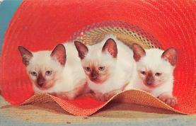 top003441 - Cat Post Card