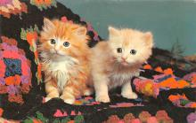 top003443 - Cat Post Card