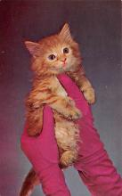 top003447 - Cat Post Card