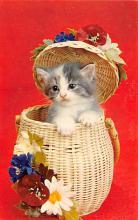 top003449 - Cat Post Card