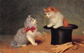 top003453 - Cat Post Card