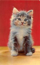 top003455 - Cat Post Card