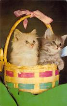 top003467 - Cat Post Card