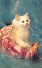 top003485 - Cat Post Card