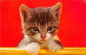 top003489 - Cat Post Card