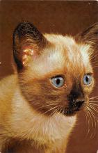 top003493 - Cat Post Card
