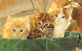 top003495 - Cat Post Card