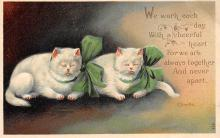 top003497 - Cat Post Card