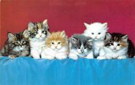 top003501 - Cat Post Card