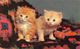 top003503 - Cat Post Card