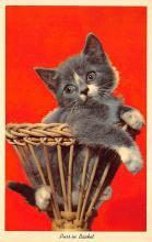 top003507 - Cat Post Card