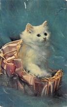 top003509 - Cat Post Card