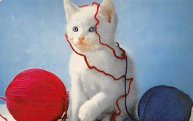 top003513 - Cat Post Card