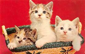 top003515 - Cat Post Card