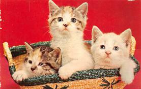 top003517 - Cat Post Card