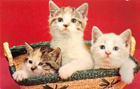 top003519 - Cat Post Card