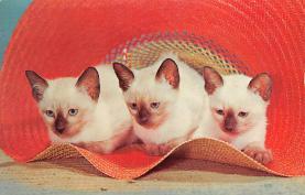 top003531 - Cat Post Card