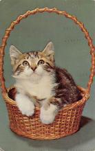 top003537 - Cat Post Card