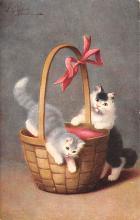 top003547 - Cat Post Card