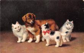 top003551 - Cat Post Card