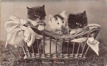 top003583 - Cat Post Card