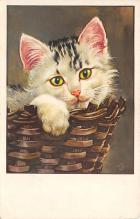 top003597 - Cat Post Card