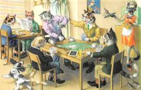 top003683 - Cat Post Card