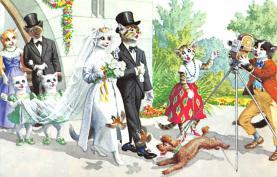 top003693 - Cat Post Card