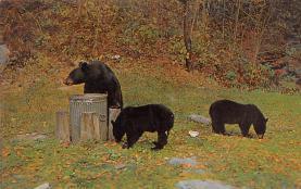 top003789 - Bear Post Card