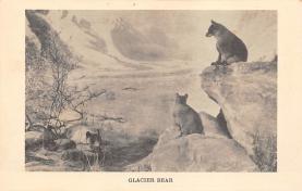 top003791 - Bear Post Card