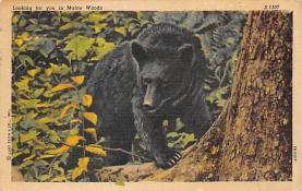 top003801 - Bear Post Card