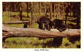 top003803 - Bear Post Card