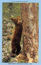 top003821 - Bear Post Card