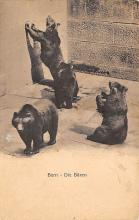 top003823 - Bear Post Card
