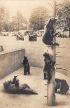 top003825 - Bear Post Card