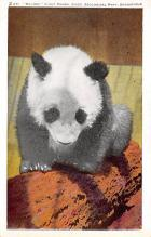 top003827 - Bear Post Card