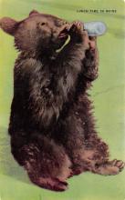 top003829 - Bear Post Card