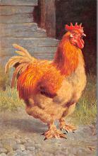top004083 - Chicken Post Card