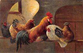 top004089 - Chicken Post Card