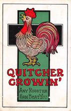 top004091 - Chicken Post Card