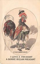 top004105 - Chicken Post Card