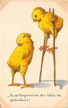 top004109 - Chicken Post Card