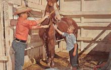 top004185 - Horse Post Card