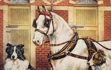 top004319 - Horse Post Card