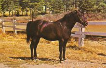 top004393 - Horse Post Card