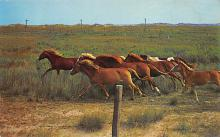 top004399 - Horse Post Card