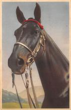 top004415 - Horse Post Card